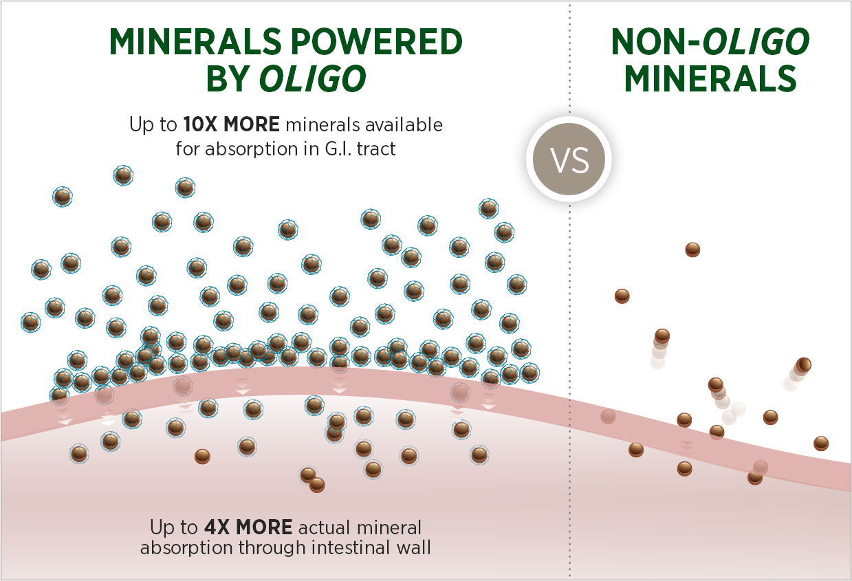 Illustration of higher absorbsion rates of Oligo-bound minerals